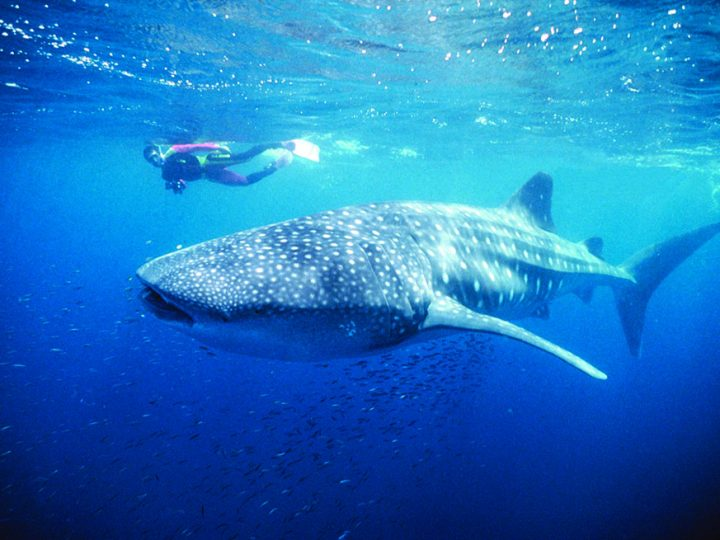 Experience the Ningaloo Reef